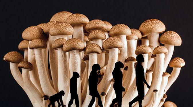 Foram os cogumelos motores da evolução humana?
