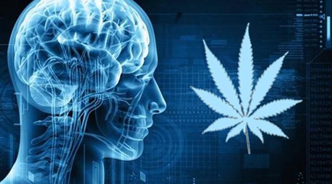 SUBSTÂNCIAS POLÊMICAS: A DIFERENÇA ENTRE CANABIDIOL E THC, UMA BREVE HISTÓRIA DOS FUNGOS E MAIS. CONFIRA AQUI